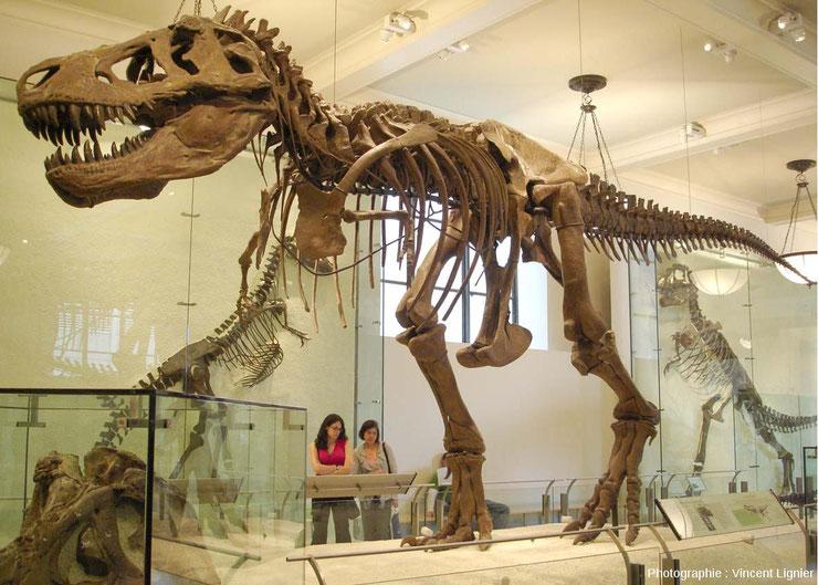 squelette dinosaure lyon tyrannosaure t-rex fiche animaux disparus