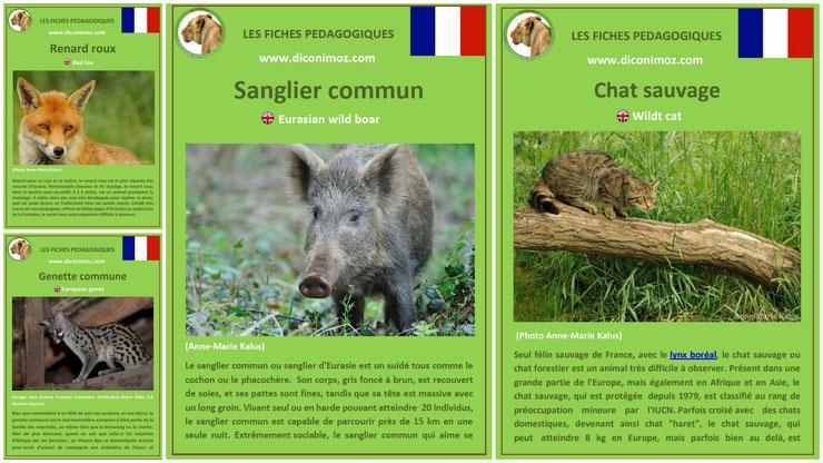 fiches animal animaux forets française pedagogiques pdf à imprimer et à telecharger devoir maison expose sanglier renard genette chat sauvage
