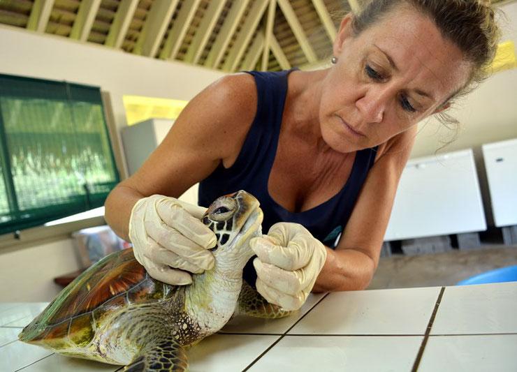 cecile gaspar veterinaire docteur en ecologie marine et fondatrice de te mana o te moana