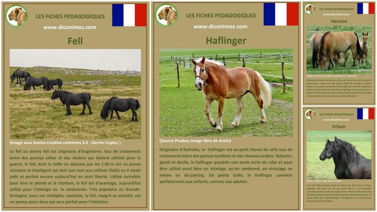 fiche cheval chevaux à telecharger et a imprimer pdf comportement origine caractere robe race haflinger frison fell henson