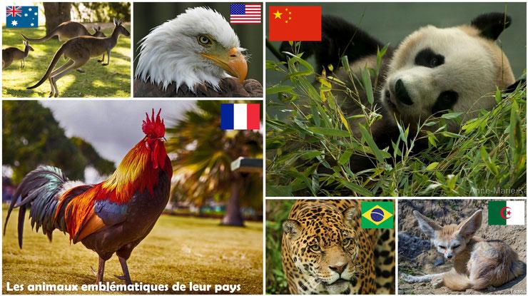 liste des animaux emblematiques de leurs pays coq france panda chine kangourou australie