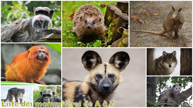 liste des mammiferes sauvages par ordre alphabetique