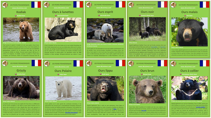 fiches pdf pedagogique sur les ours thematique imprimable telechargeable download facts bears