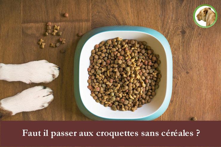 choisir ses croquettes sans cereales