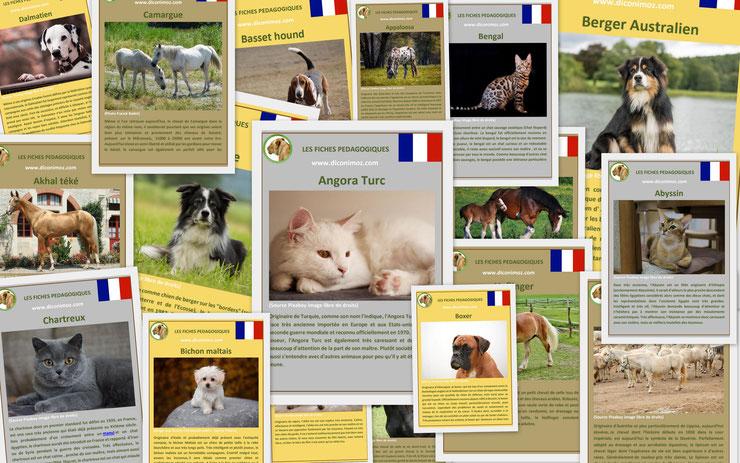 fiche fiches pedagogiques animaux de compagnie chien chat chevaux ferme telechargeables imprimables telecharger imprimer download facts