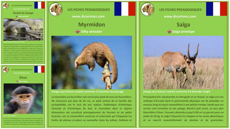 fiche animaux meconnus à telecharger et a imprimer pdf habitat taille poids reproduction alimentation : le myrmidon, le saïga, le gavial et le douc