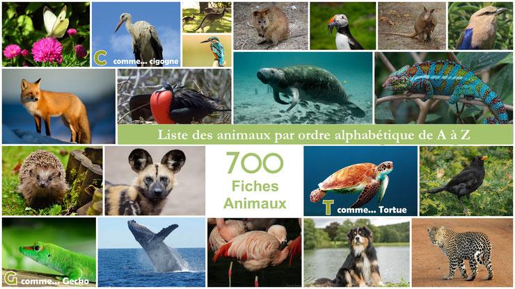 liste des animaux du monde par ordre alphabétique de A à Z A comme abeille B comme Bison C comme Chouette