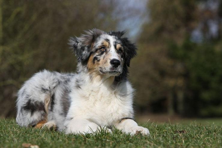 fiche animaux chiens fact dog dictionnaire monde