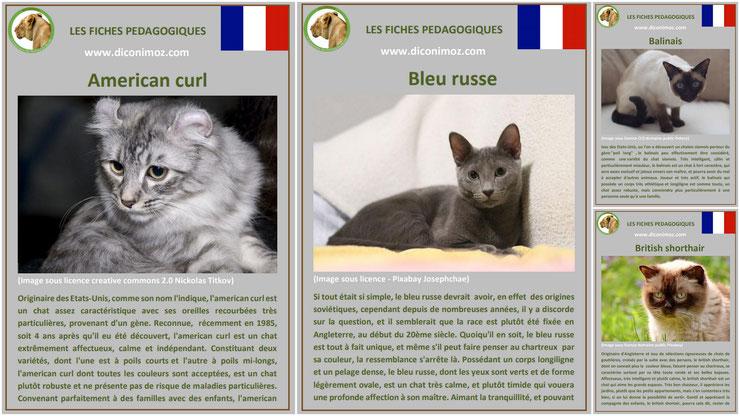fiche animaux animal de compagnie  chat à telecharger et a imprimer pdf comportement origine caractere american curl bleu russe balinais british shorthair