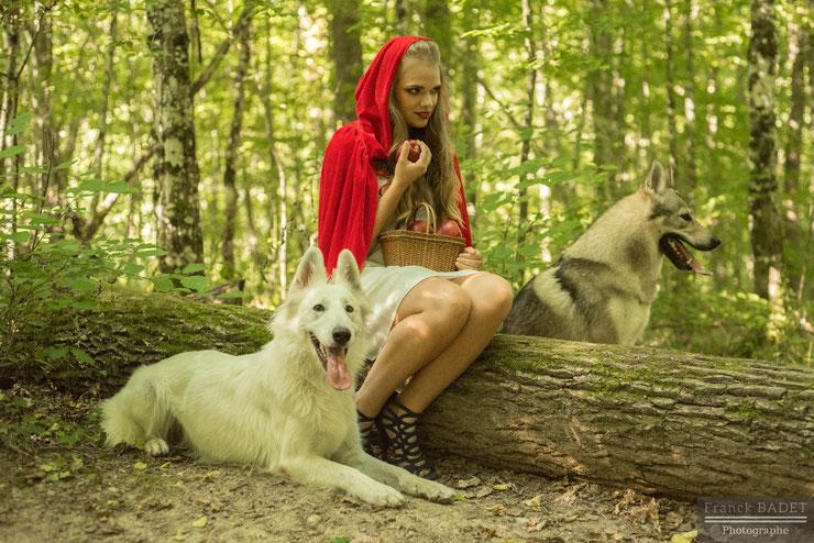 chaperon rouge dogwolf berger blanc suisse chien loup tchecoslovaque