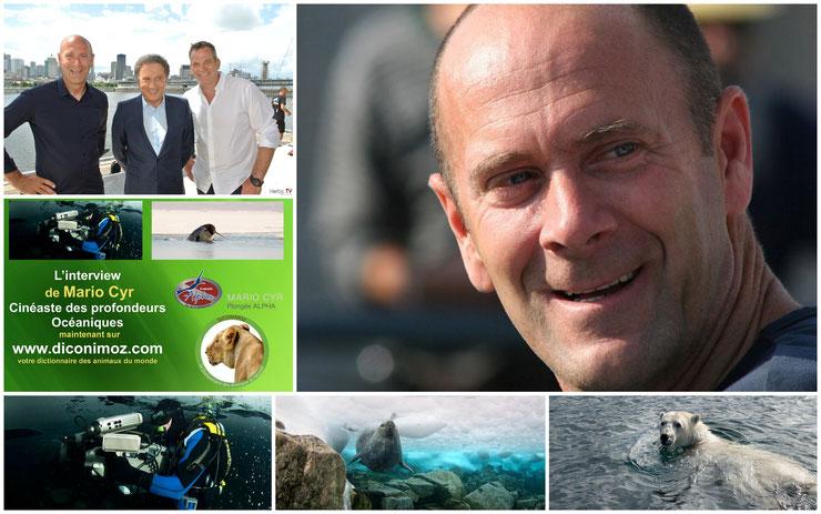 interview de diconimoz mario cyr cineaste plongeur quebec canada national geographic banquise sous marin