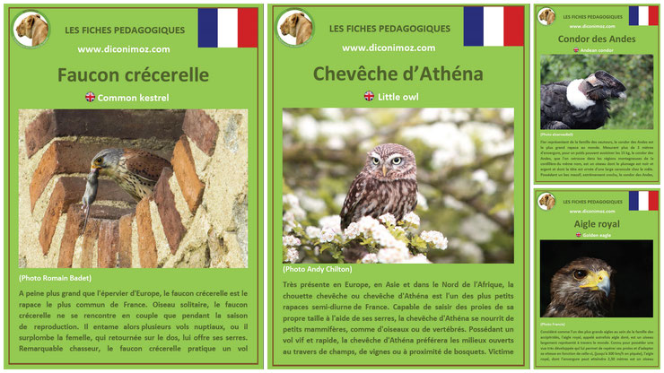 fiches animaux pedagogiques oiseaux rapaces à telecharger et a imprimer pdf download animal fact faucon crecerelle aigle royal chouette cheveche athena condor des andes