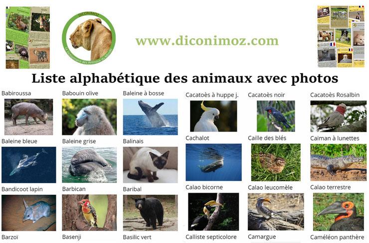 liste des animaux par images photos et par ordre alphabétique de A à Z