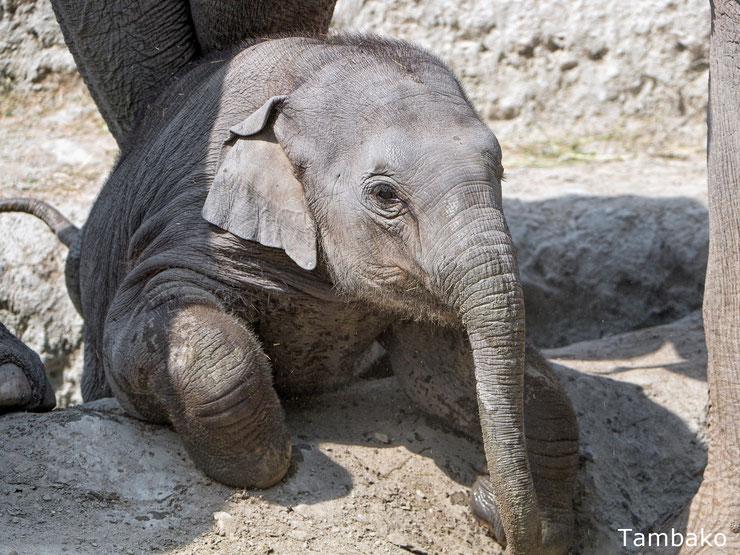 bebe elephant animaux mignon cute animals baby