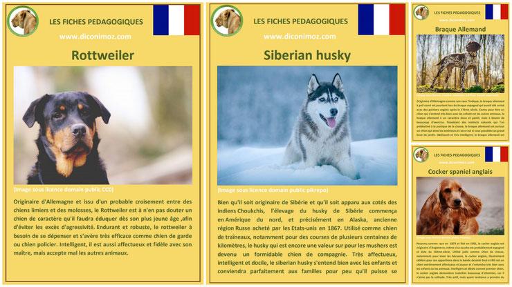 fiche animaux animal de compagnie  chien à telecharger et a imprimer pdf comportement origine caractere race siberian husky rottweiler braque allemand cocker spaniel anglais