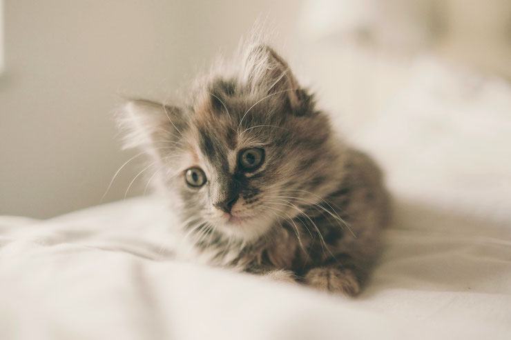 adorable chatons mignons chat cute image photo