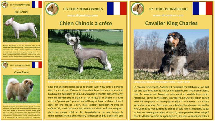fiche animaux animal de compagnie  chien à telecharger et a imprimer pdf comportement origine caractere race chien nu chinois a crete bull terrier chow chow cavalier king charles