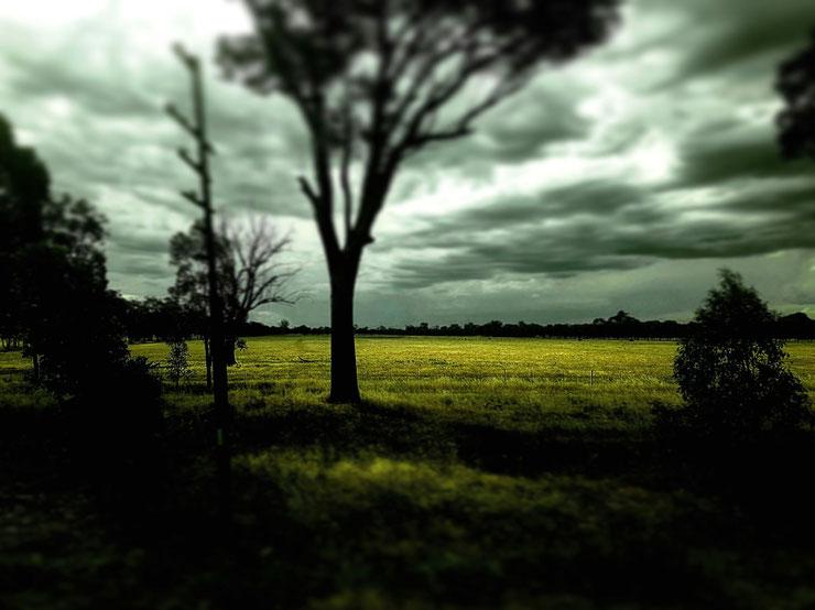 'field of light'