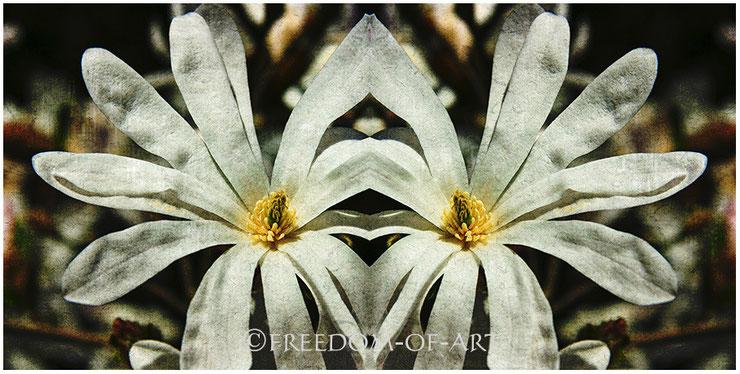 Magnolienpaar
