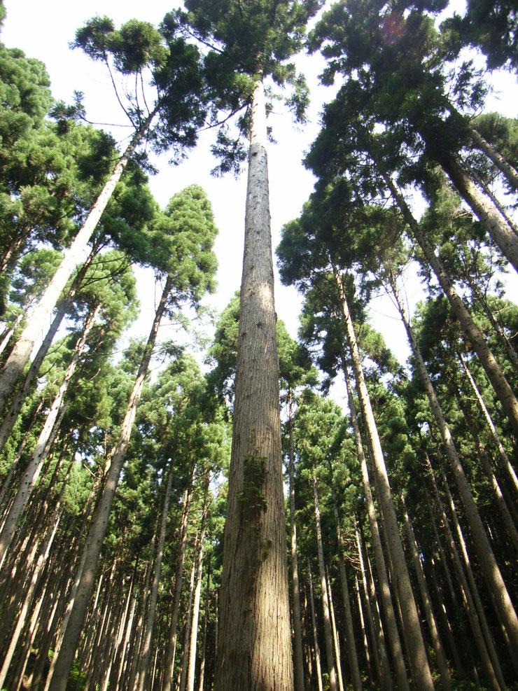 岡山県北の森林