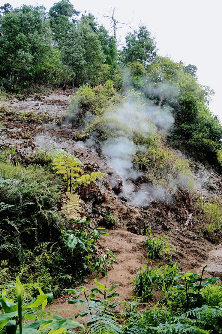 Dampfende Erde - Sao Miguel