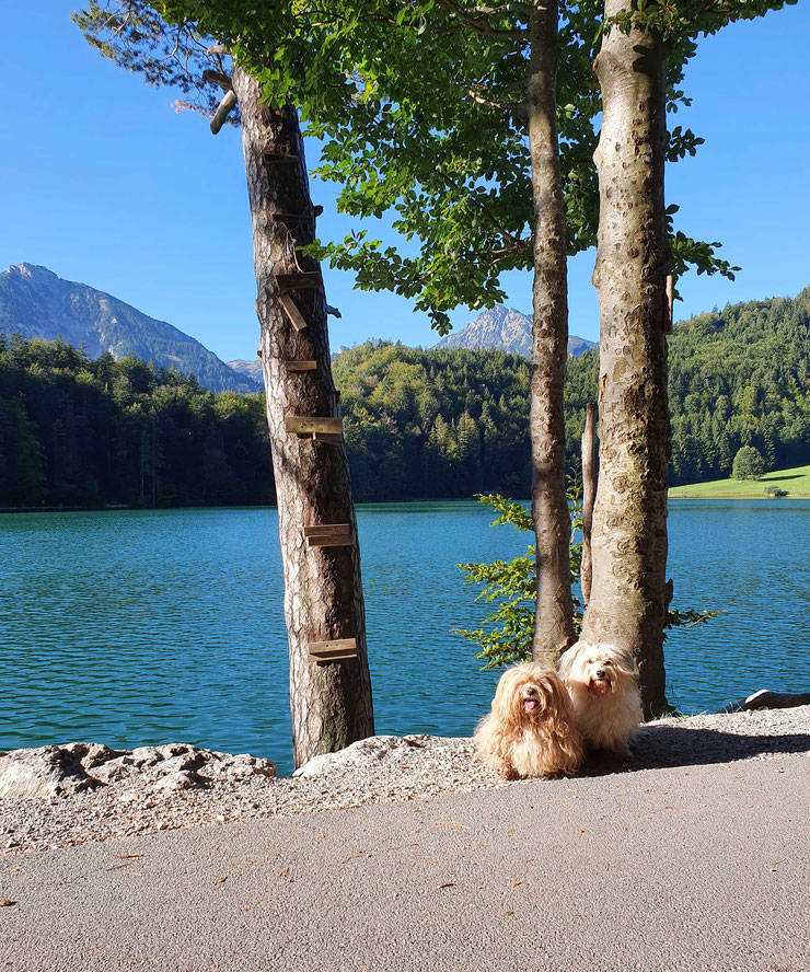 zwei Hunde vor See und Bergen