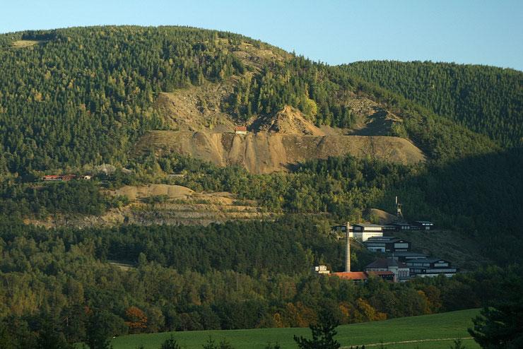 Fichtenmonokulturen am Rammelsberg und seiner Umgebung auf Waldstandorten, auf denen von Natur aus Buchen wachsen würden. Foto Siegfried Wielert.