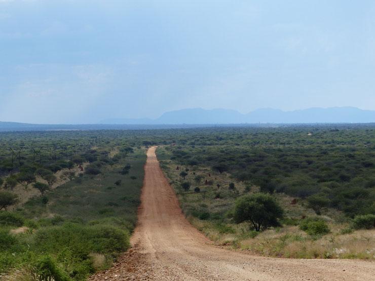 Hochebene, 1.600 m, Fahrt von Otjiwarongo zur Cheetah Foundation, nach dem Regen