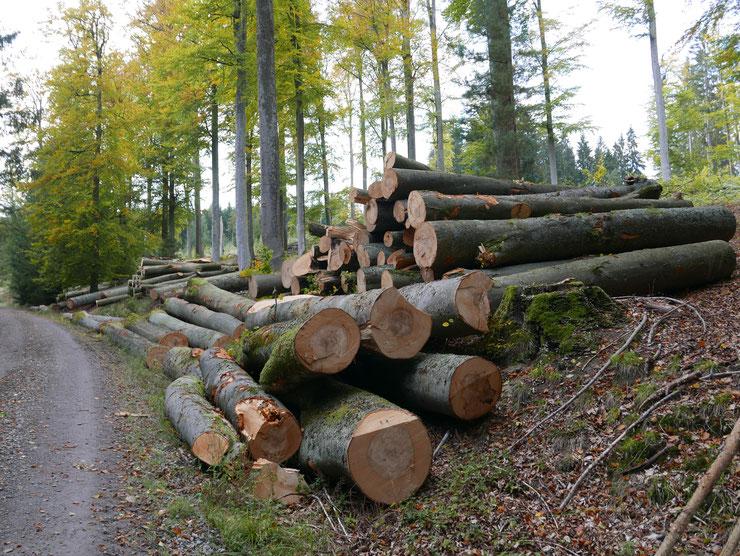 Fortdauernde Einschläge ins Altholz - hoher ökologischer Verlust für vergleichsweise geringen Ertrag