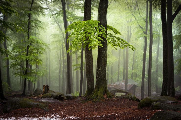 Das NSG Felsberg - eine faszinierende Waldlandschaft © Yvonne Albe