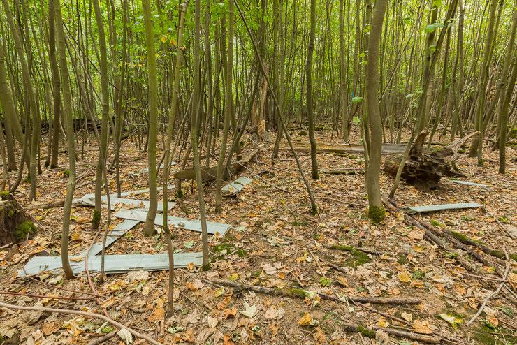 Städtisches Forstamt Leipzig  - Mittelwaldumwandlung im Naturschutzgebiet Burgaue, Naturzerstörung pur
