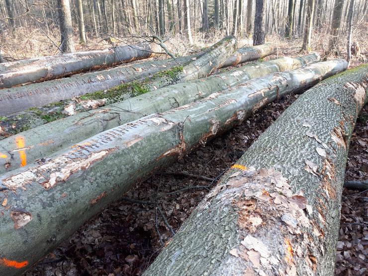Pfälzerwald, Januar 2020