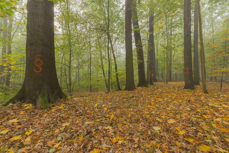 Diese Waldfläche sollte vor 3 Jahren zu Mittelwald umgewandelt werden. NuKLA konnte diese Waldzerstörung bis heute verhindern!
