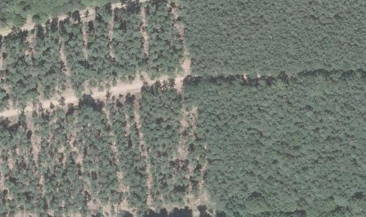 Bewirtschafteter Staatswald in Deutschland: NACHHER - VORHER