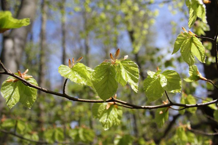Das wollen Bürger: Gesunde, naturnahe Wälder. Profit muss im Staatswald endlich nachrangig werden!