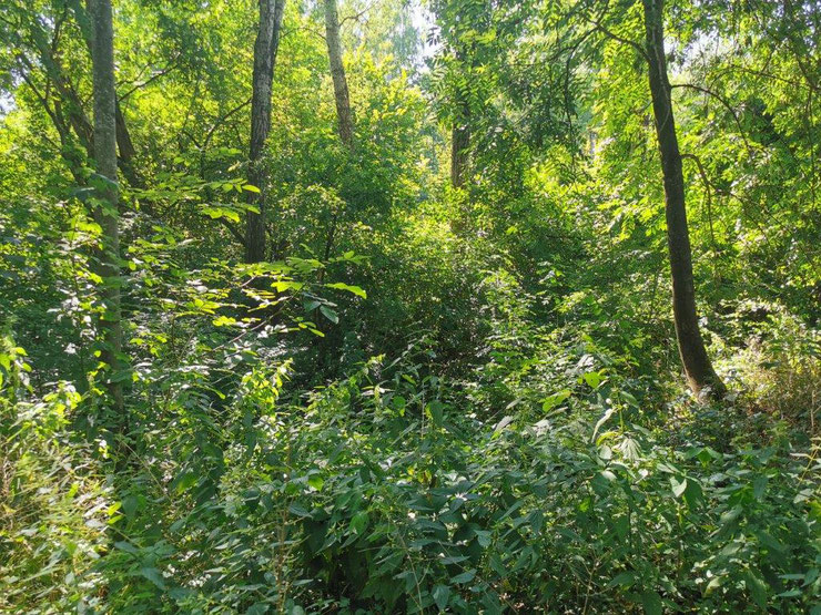 Der reinste Dschungel: Artenreicher Laubwald im Sommer