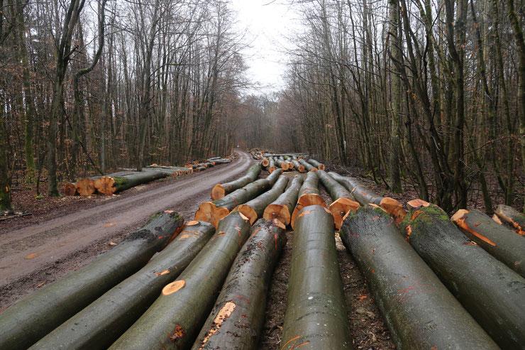 Die Schirme liegen an den Waldwegen, bereit für den Export nach China?