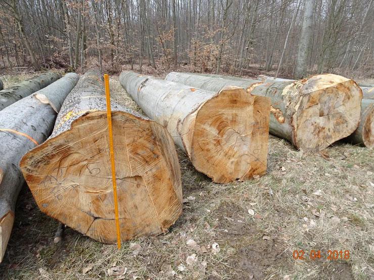 Einschlag im FFH-Gebiet Tautenburger Forst