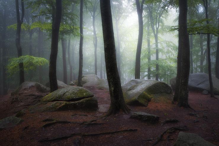 Bilder aus einem Naturschutzgebiet von herausragender Schönheit © Yvonne Albe