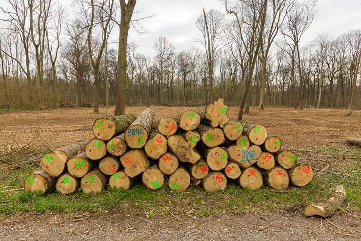 """Forstliche """"Pflege"""" im Naturschutzgebiet Luppeaue (Die Wege im NSG dürfen nur durch Harvester & Co verlassen werden...)"""