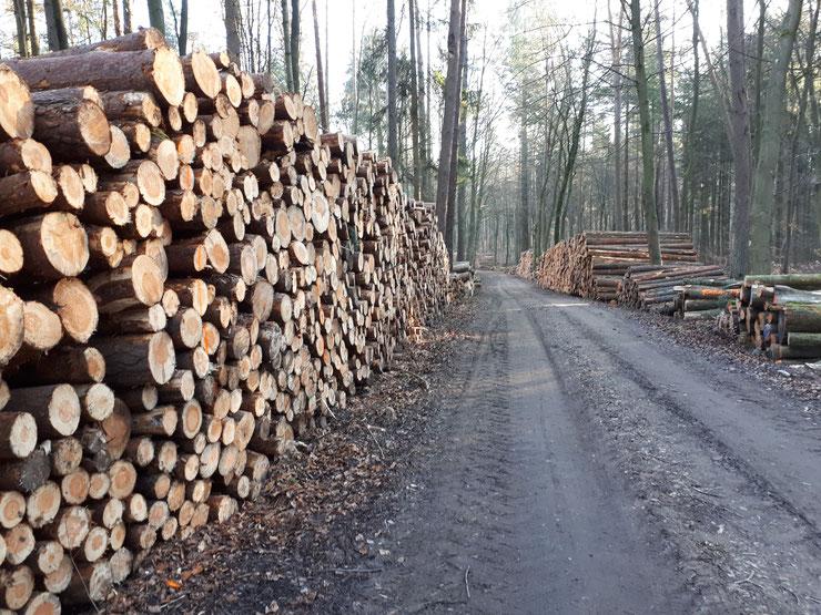 Pfälzerwald , Februar 2020. Einschlagsmassen entlang der Wege.
