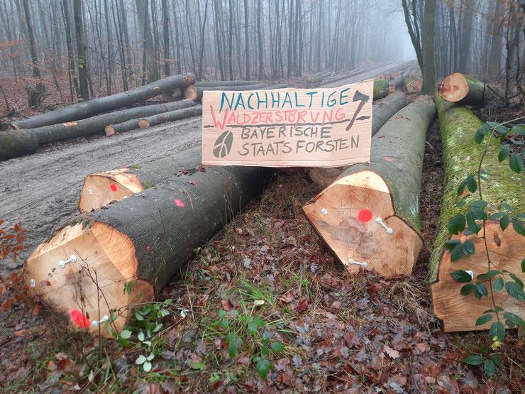 Forstwirtschaft Bayern, Foto Verein Nationalpark Steigerwald