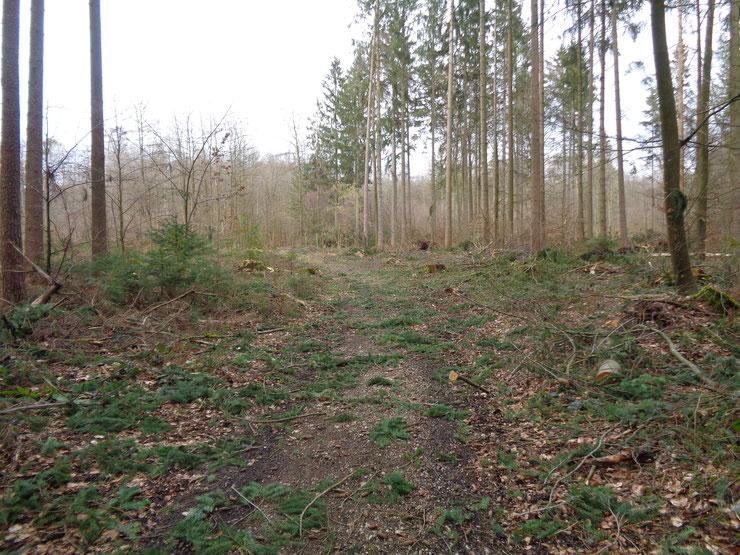 Winter 2019/20: Der Haunstettener Forst nach Bewirtschaftung - einladend?