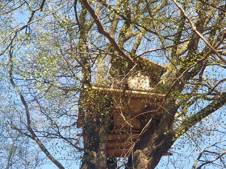 Baumbesetzung durch Mitglieder des Aktionsbündnisses Keine A 49, copyright B. Schlemmer