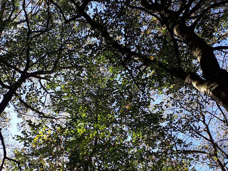 Geschlossene Baumkronenbereiche schützen das Waldinnenklima. Die aktuell praktizierte hohe Entnahme alter Bäume ist  deshalb kritisch zu bewerten. Zudem sind gerade die Altbäume Hotspots der Artenvielfalt.