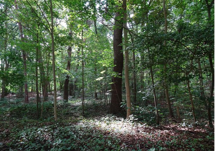 östlicher Waldteil