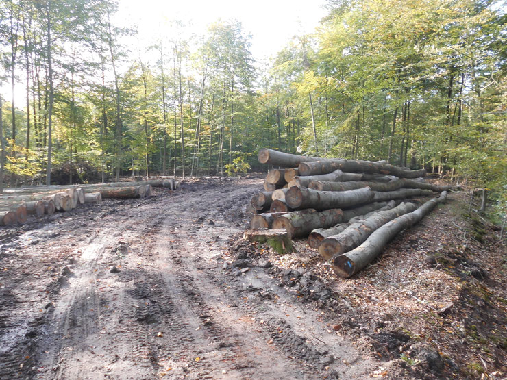 Wald-Zerstörung Asbeck, Bildrecht J. Kruse