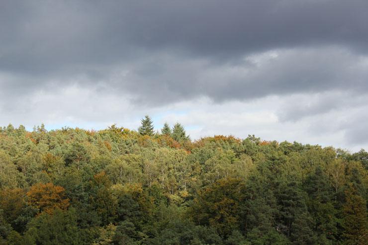 Pfälzerwald - Mischwald in Steillage
