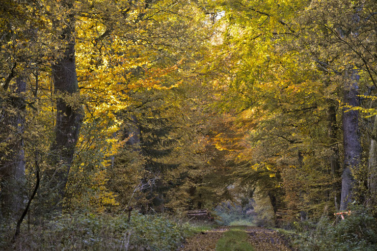 Foto copyright Gero Lenhardt: Herbstlicher Reinhardswald