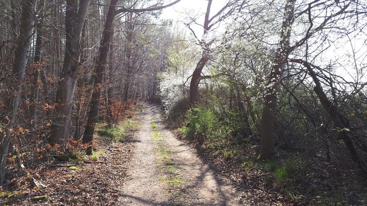 Frühjahrswälder atmen auf und mit ihnen die Insektenwelt. Der Giftregen bleibt aus.